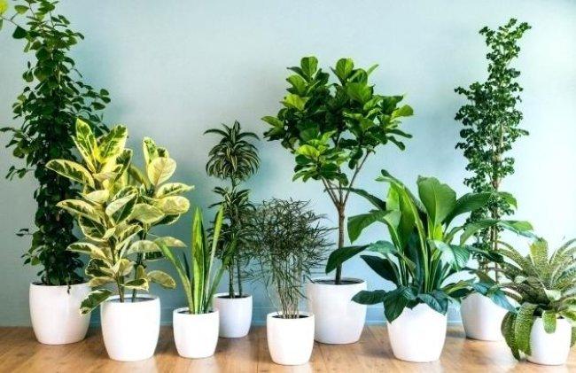 Plantas de interior grandes y altas
