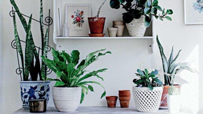 Plantas de interior sin flor